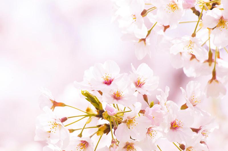 桜の季節、魅せるだけでなくフォロワーを巻き込む施策とは / Instagram企業アカウント調査【2017年4月度】